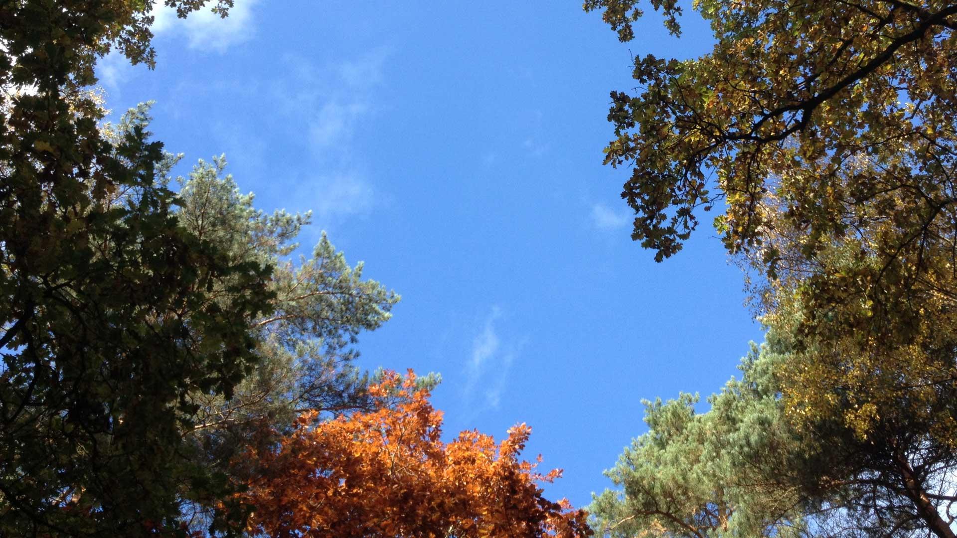 Heilpraktiker für Psychotherapie Berlin | Bäume & Himmel